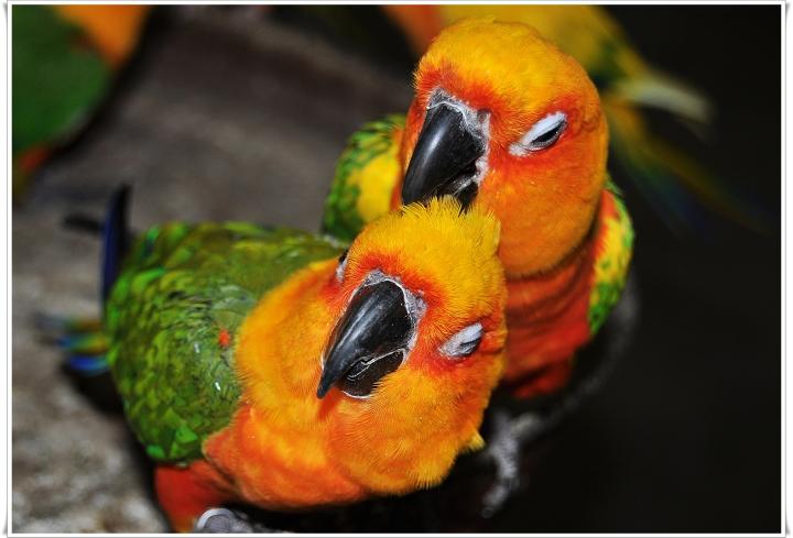 Ферма попугаев в KfarHess