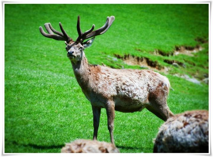 Парк дикой природы(Австрия)
